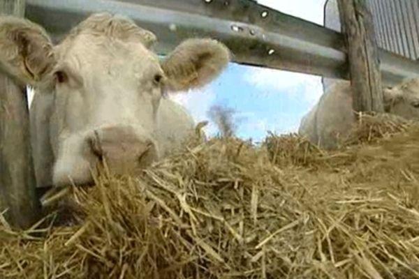 Un élevage en Bourgogne