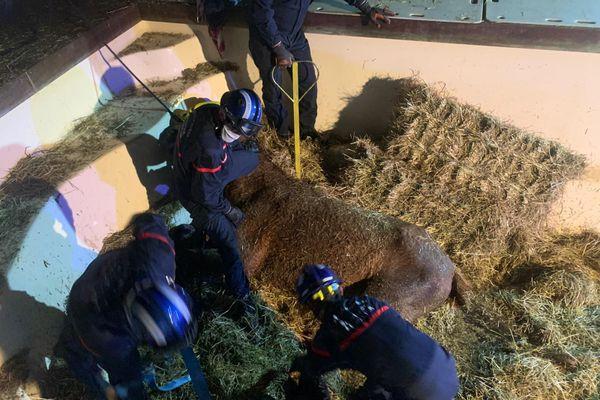 A Vence, Il aura fallu plusieurs heures ce weekend aux secours, pour sortir l'animal.
