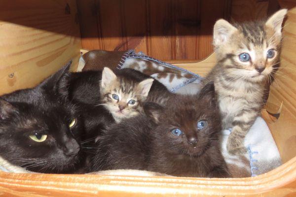 Les refuges ne sont pas saturés mais bon nombre de chats attendent d'être adoptés.