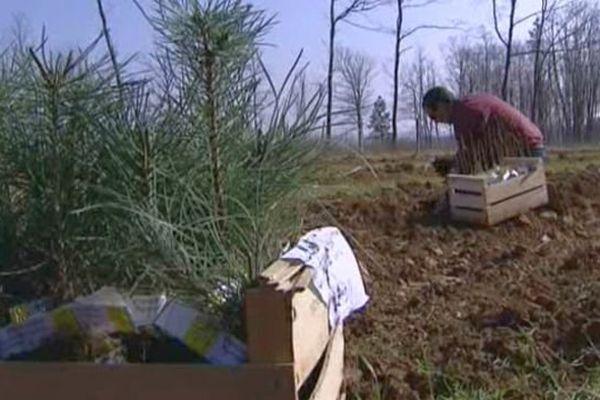Une truffière a été plantée sur une parcelle communale à Voulaines-les-Templiers, dans le Châtillonnais, en Côte d'Or.
