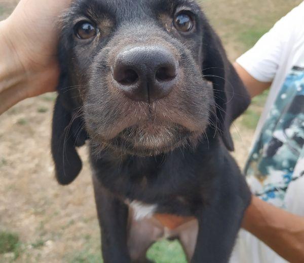 Ce chien a été récupéré par l'association. Il fait partie des 300 animaux recueillis en 2021.