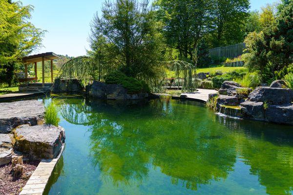 Le bassin natatoire