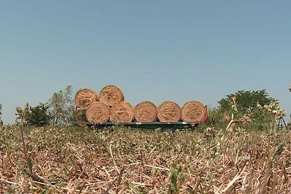 Crevasses et végétaux brûlés : pas de deuxième récolte de fourrage pour certains exploitants catalans.