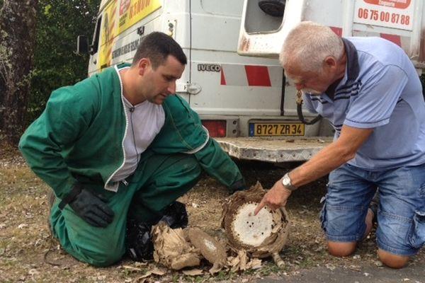 Intervention sur nid de frelons asiatiques à Allassac (19) mercredi 5 septembre 2012