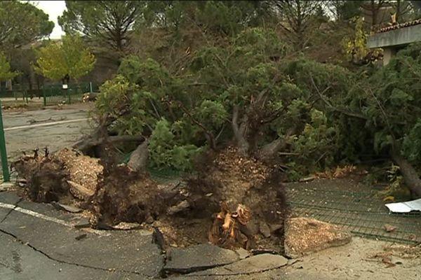 Plusieurs arbres ont été déracinés dans la cour de l'école de Saint-Martin-de-Londres dans l'Hérault la nuit du 24 novembre 2016
