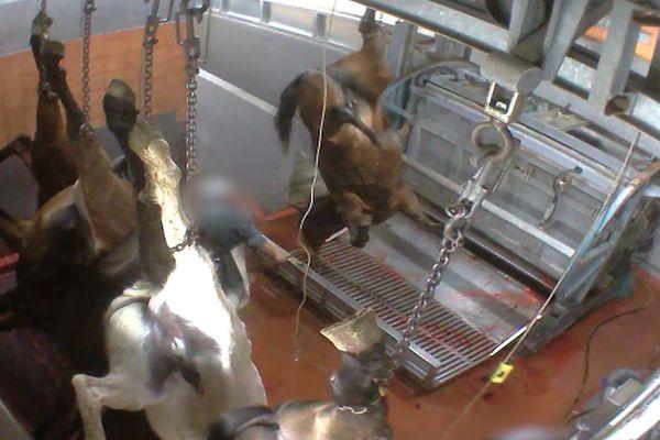 Etourdissement de chevaux à l'abattoir de Pézenas (34)