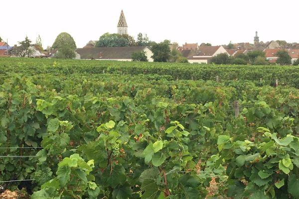 Un vignoble à Nuits-Saint-Georges, en Côte-d'Or