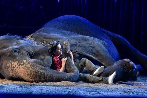 C'est noyé dans la trompe d'une éléphante couchée sur la piste que le plus jeune fils de la famille Gärtner, s'est présenté.