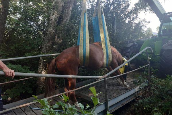 Le cheval en mauvaise posture a été soulevé délicatement avant de pouvoir regagner la terre ferme.