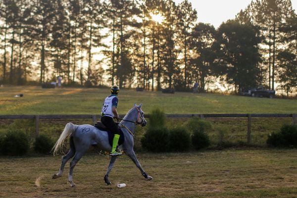 Compétition d'endurance aux Jeux Équestres Mondiaux à Tryon (USA)