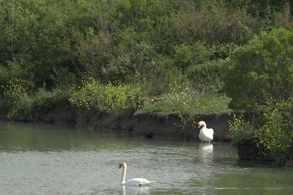 Une partie des marais de Tasdon a conservé son aspect de zone humide.
