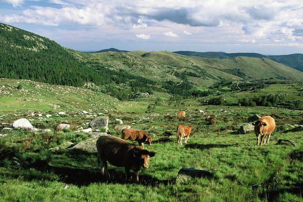Une photographie du Parc National des Cévennes, prise en 2011 du Mont Lozère.