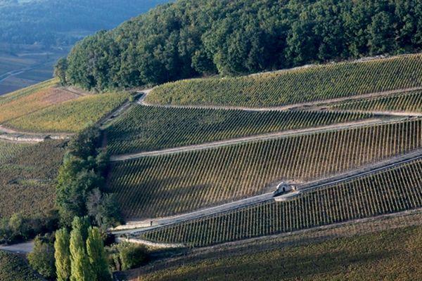 """Les """"Climats du vignoble de Bourgogne"""" sont candidats à une inscription au patrimoine mondial de l'Unesco."""