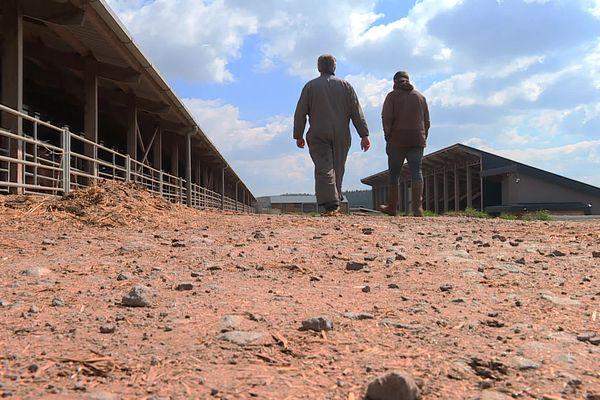 Crée il y a cinq ans, la ferme des 1000 veaux perd 100 000 euros chaque année.