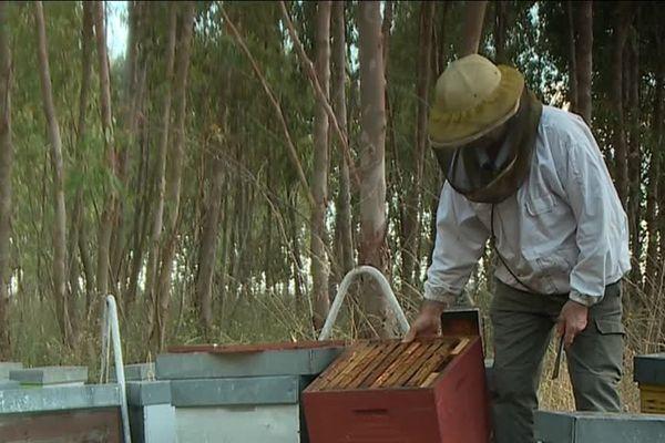 Depuis 20 ans, les apiculteurs se battaient pour l'interdiction des néonicotinoïdes qui décimaient les populations d'abeilles
