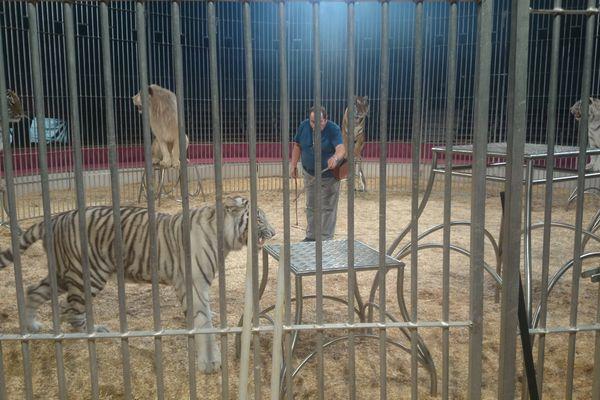 Yann Gruss, ses tigres et son lion