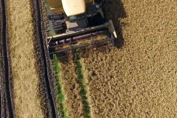 Saint-Gilles (Gard) - la récolte du riz en Camargue - septembre 2016.