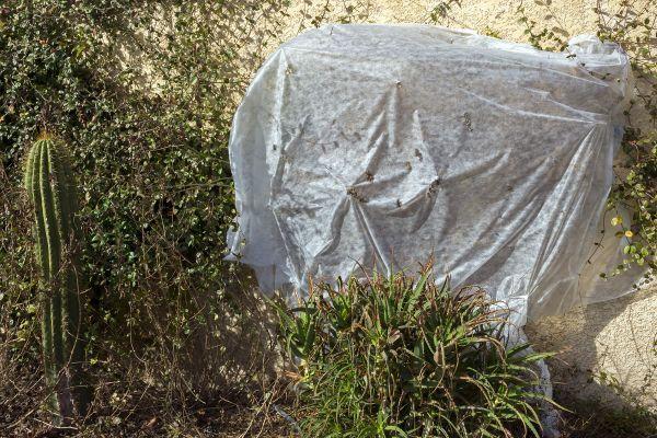 Face aux gelées qui sont annoncées en Auvergne, les potagers doivent être protégés. (Photo d'illustration)