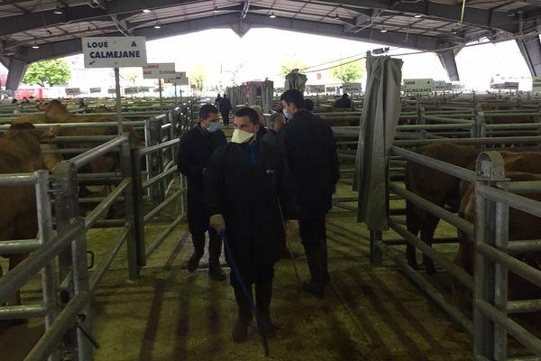le marché aux bestiaux de Laissac dans l'Aveyron a rouvert avec des conditions strictes en raison de l'épidémie de coronavirus