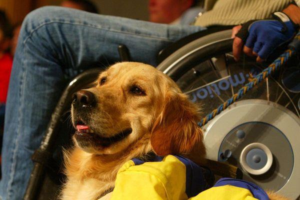 Plus de 1000 chiens d'assistance viennent actuellement en aide à des personnes malades ou handicapées dans toute la France.
