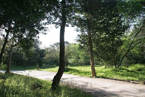 Montpellier - Le bois de Montmaur - 2013.