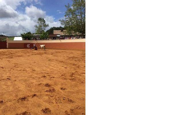 Une tienta dans les arènes de la ganaderia Casanueva à Montsoué dans les Landes