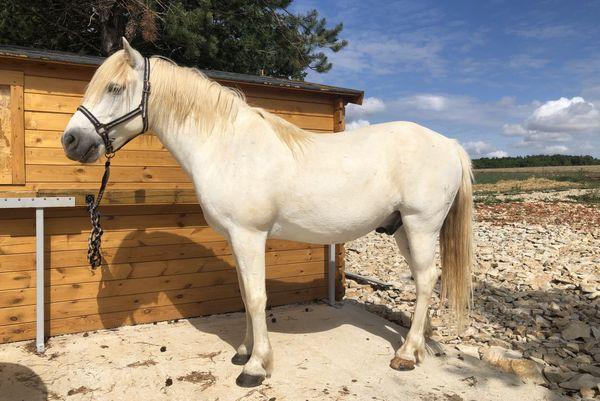 Kiebro, cheval Camargue, mon compagnon de route pour une heure !