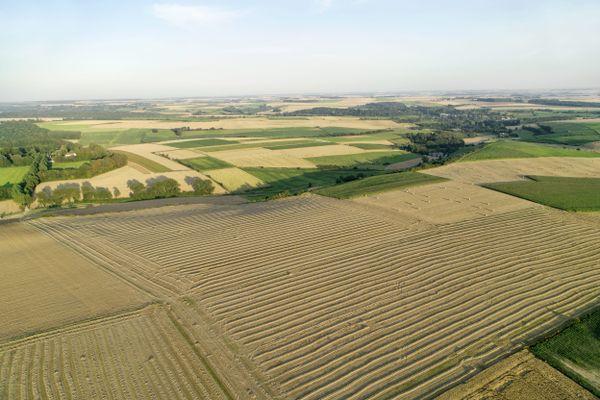 Un champ de céréales, dans le Boulonnais.