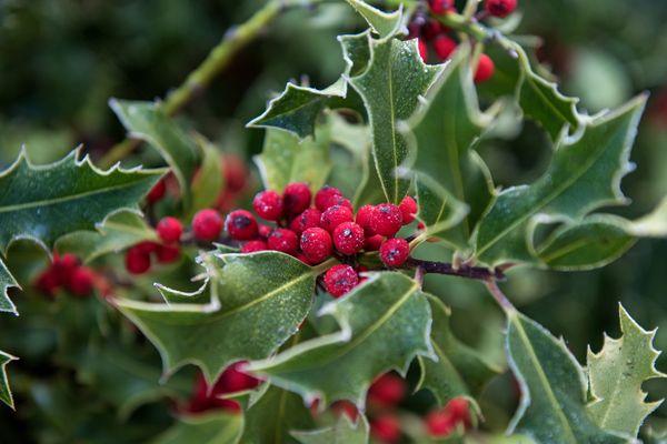 Les températures seront clémentes pour Noël en Auvergne-Rhône-Alpes mais le mercure devrait se refroidir en milieu de semaine.