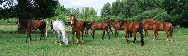 Découvrez le nouveau site C Cheval, pour et par ceux qui aiment les chevaux, poneys et ânes...