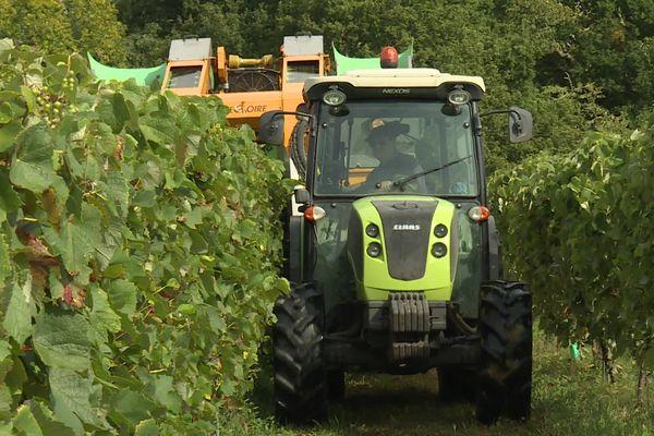 Les vendages ont commencé à Lacquy dans les Landes.