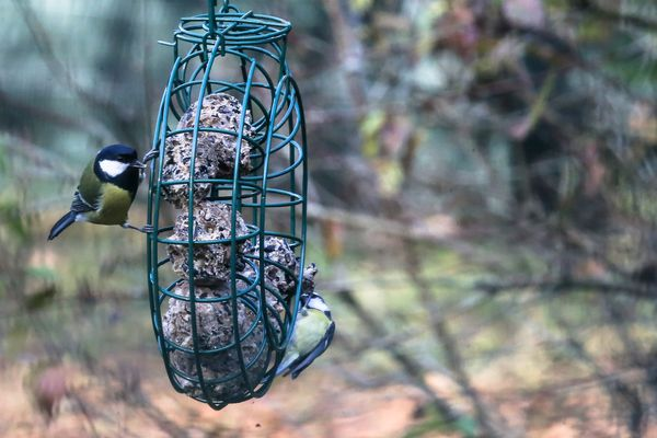 Il est souvent conseillé d'arrêter de  nourrir les oiseaux des jardins au mois de mars.