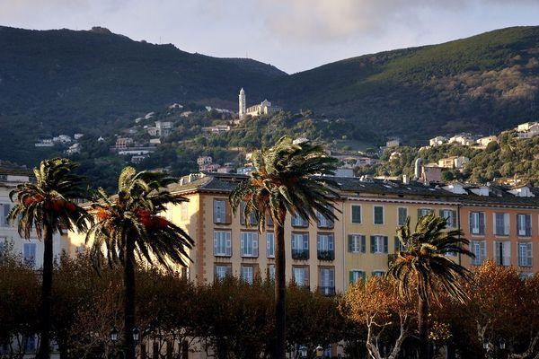 ILLUSTRATION - Les palmiers de la place Saint Nicolas à Bastia (Haute-Corse)