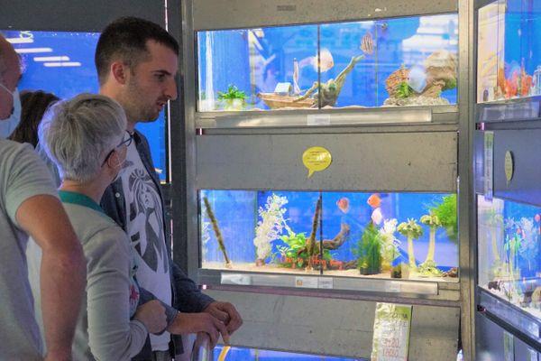 Admirer les poissons dans les aquariums se mérite pour ce jeune autiste