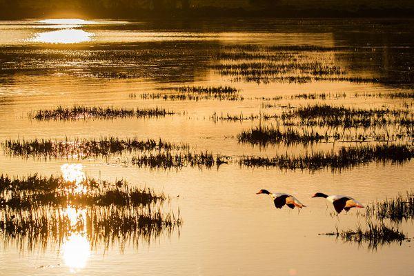 Reflets sur la Ria d'Etel... Pointe du Gouarde - Nostang - Morbihan