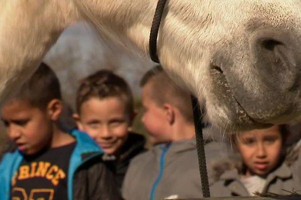Les écoliers de CE2 de Bellegarde dans le Gard en sortie scolaire dans une manade d'Arles, à la découverte des chevaux et des traditions camarguaises - avril 2018.