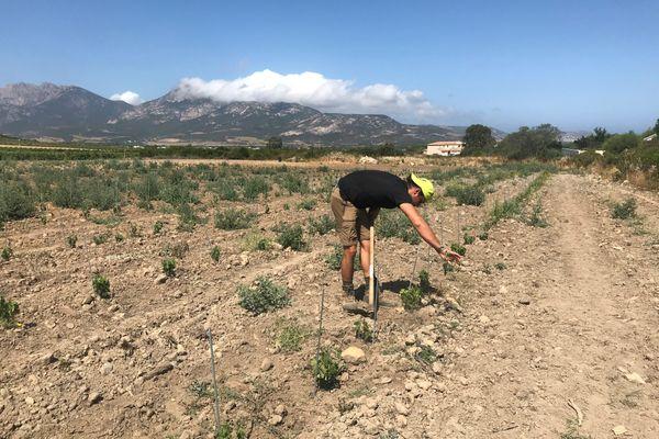 L'exploitation viticole de quelque huit hectares en conversion bio est la plus petite de l'appellation d'origine contrôlée de Calvi.