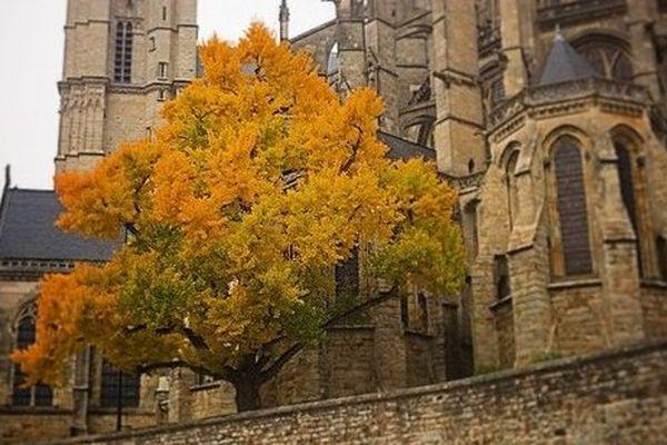 Le ginko biloba de la cathédrale du Mans a été abattu pour permettre des fouilles archéologiques