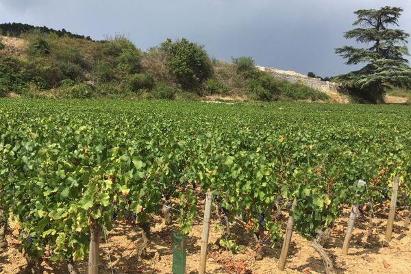 Un domaine viticole à Santenay, en Côte-d'Or