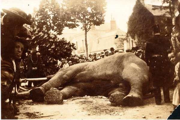 La mort de Fritz, à Tours, le 11 juin 1902