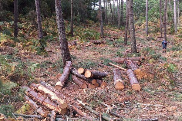 Après l'abattage illégal, la mairie a fait placer les arbres sous scellés.