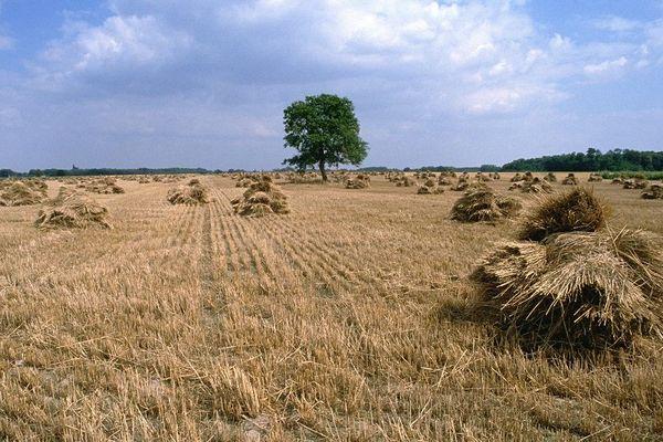 Des terres agricoles dans la Vallée de la Loire.