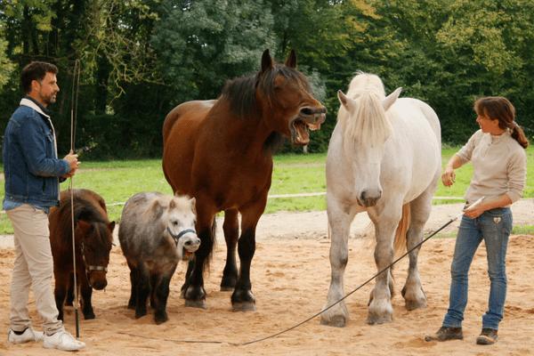 Pour savoir ce que se racontent ces chevaux, rendez-vous dans Histoire de se balader !