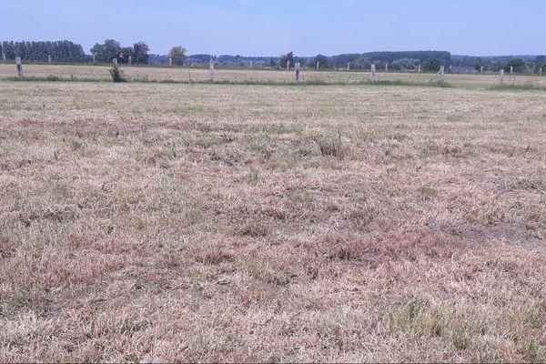 Prairie dans l'Avesnois le 10 juin 2020