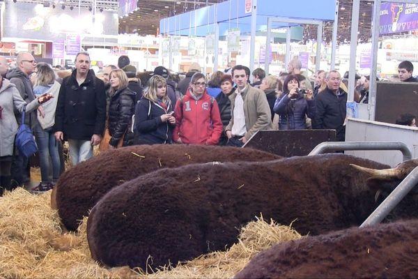 François Roussel discute avec des visiteurs, devant ses deux vaches qu'il expose.