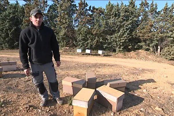Deux apiculteurs des Pyrénées-Orientales se sont fait voler des ruches au début du mois de février