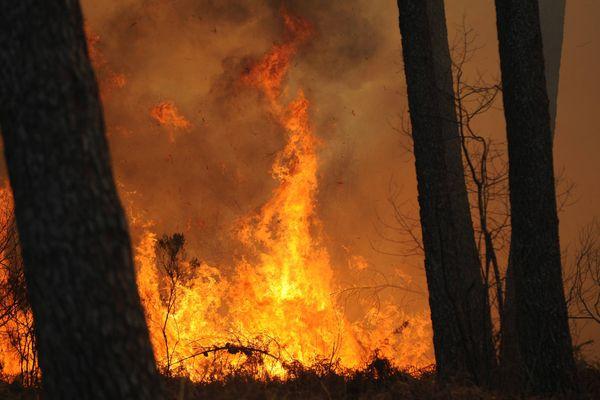 Feu de forêt de pins (image d'illustration)