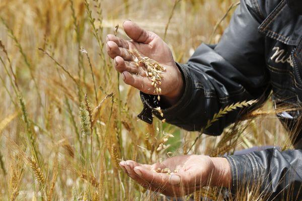 Axéréal est une coopérative agro-alimentaire basée à Olivet, dans le Loiret. Photo d'illustration