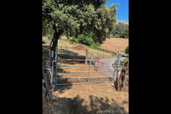 Au printemps, la municipalité d'Olmi Capella, en Balagne, a mis en place un enclos de rétention pour lutter contre la divagation des animaux.