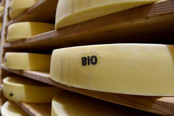 Le Comté bio est fait à partir de lait de vache bio.